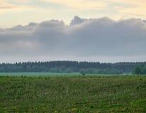 Campos y bosque rurales Foto de archivo