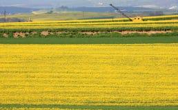Campos y grúa amarillos de la colza en Alemania Imágenes de archivo libres de regalías