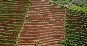 Campos y granjeros colgantes enormes almacen de video