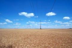 Campos y líneas eléctricas de trigo imagen de archivo libre de regalías