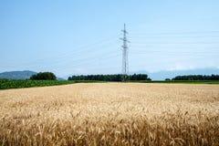 Campos y pilones amarillos de trigo Fotografía de archivo