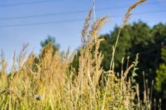 Campos y prados Imagen de archivo