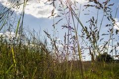 Campos y prados Fotos de archivo