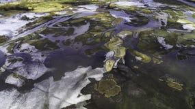Campos y prados de la primavera durante deshielos Fotos de archivo libres de regalías