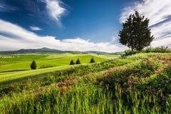 Campos y prados verdes en el valle de Toscana Fotos de archivo
