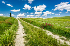 Campos y prados verdes en Toscana Imagen de archivo libre de regalías