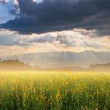Campos y puesta del sol amarillos de flor Fotografía de archivo