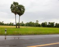 Campos y troncos del arroz Imagen de archivo libre de regalías