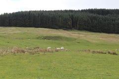 Campsieheuvels dichtbij lennoxtown stock fotografie