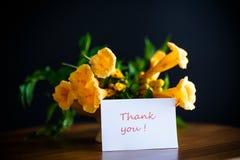 Campsis de florescência amarelo das flores em um preto Fotografia de Stock Royalty Free