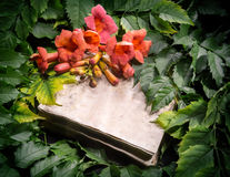 Campsis radicans flowers on old open book Stock Images