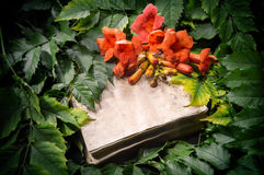 Campsis radicans flowers on old open book Stock Image