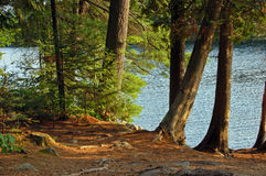 Campsite. On the lake in Algonquin Park in sunset light Royalty Free Stock Image