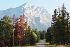 Campsite de Montanhas Rochosas Imagem de Stock Royalty Free