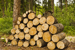 Campsite firewood. Logs cut and stacked for firewood in a campsite in the Yukon, Canada Stock Photography