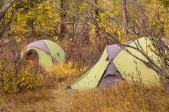 Campsite with green tents in an autumn forest. Royalty Free Stock Photography
