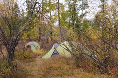 Campsite with green tents in an autumn forest. Stock Images