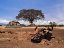 Campsite in Ngorongro Royalty Free Stock Photos
