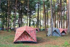 The campsite in pine forest. At Phu Hin Rong Kla National park. Phitsanulok province, Thailand royalty free stock photos