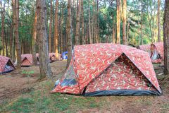 The campsite in pine forest. At Phu Hin Rong Kla National park. Phitsanulok province, Thailand royalty free stock images
