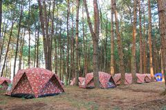 The campsite in pine forest. At Phu Hin Rong Kla National park. Phitsanulok province, Thailand stock photo
