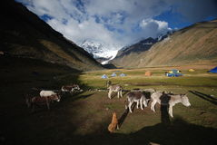 Campsite with tents and donkeys. In the Huayhuash, Peru stock photo
