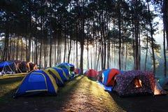 Campsite w sosnowym lesie Zdjęcie Royalty Free