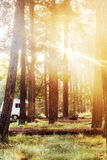Campsite in Woods With Morning Sunlight Royalty Free Stock Images