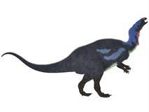 Camptosaurus op Wit Royalty-vrije Stock Fotografie
