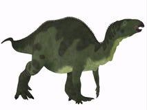 Camptosaurus over White Royalty Free Stock Image