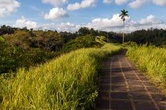Campuhan Ridge Path photos stock