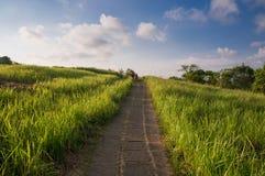Campuhan Ridge Walk dans Ubud, Bali Image libre de droits