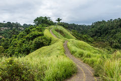 Campuhan Ridge Walk. Ubud, Bali Stock Image