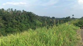 Campuhan Ridge Walk, valle verde escénico en Ubud Bali, vídeo de la cantidad 4k almacen de video