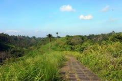 Campuhanen Ridge Walk, Ubud, Bali, Indonesien Arkivbilder