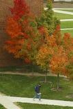 Campus in de Herfst Stock Afbeeldingen