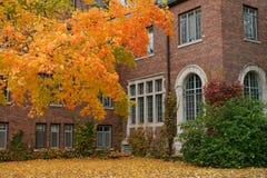 Campus de la universidad de la caída Fotos de archivo libres de regalías
