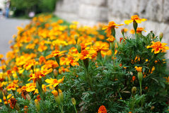 The campus of flowers Stock Image