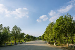 The campus road, green trees on both sides Royalty Free Stock Photography