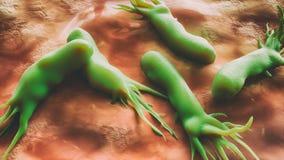 Campyl-Bakterium jejuni Bakterien - Rasterelektronenmikroskop - Nahaufnahme - Wiedergabe 3D stock abbildung