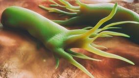 Campylobacter βακτηρίδια jejuni - ηλεκτρονικό μικροσκόπιο ανίχνευσης - κινηματογράφηση σε πρώτο πλάνο - τρισδιάστατη απόδοση διανυσματική απεικόνιση