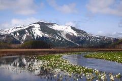 Camtschatcense del Lysichiton e Mt.Shibutu immagini stock libere da diritti