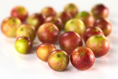 Camu Camu Stock Photography