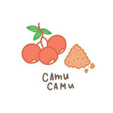 Camu camu powder superfood. Royalty Free Stock Photo