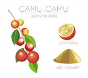 Camu superfood Stock Images