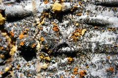 Camuflaje de la araña foto de archivo libre de regalías