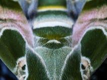Camuflaje de la mariposa Fotos de archivo libres de regalías