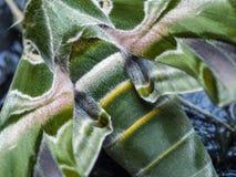 Camuflaje de la mariposa Imagen de archivo