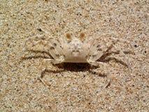 Camuflaje del cangrejo de la arena fotografía de archivo