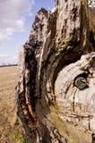 Camuflaje Geocache ocultado en un árbol fotografía de archivo